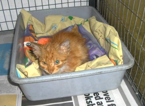 The Gozo SPCA are hoping for a loving home for Misty