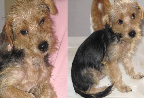 The Gozo SPCA has chosen Teddy for their dog of the week