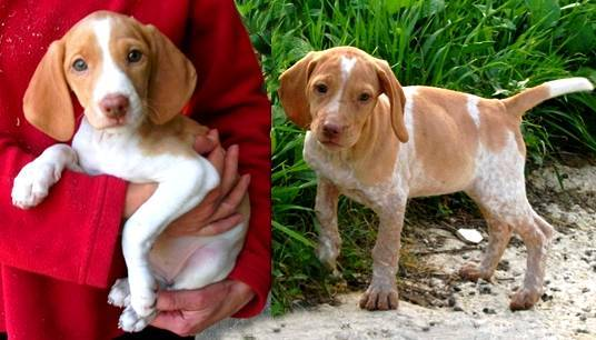 The Gozo SPCA are helping to find homes for Lene and Avril