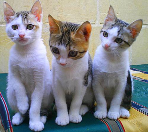 The Gozo SPCA need homes for these lovely kittens