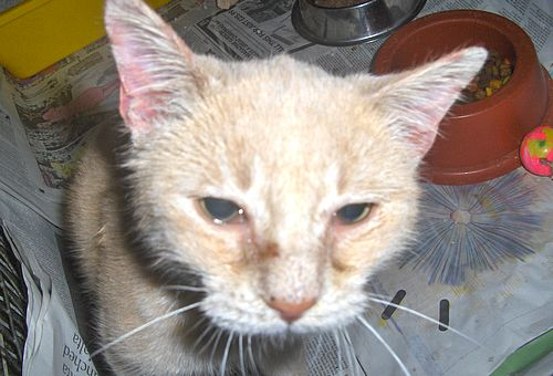 The Gozo SPCA hopes that Gozi will soon find a new home
