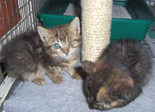 The Gozo SPCA are looking for homes for Tortie & Tessie