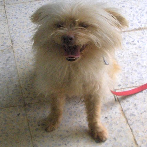 The Gozo SPCA are hoping for a loving home for Benjy