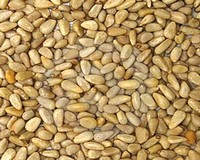 Warning - Adulterated pine nuts from China on Local Market