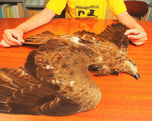 BirdLife calls for the spring hunting season to close