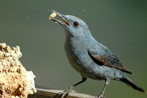 Stunning wild bird photos taken locally feature in exhibition