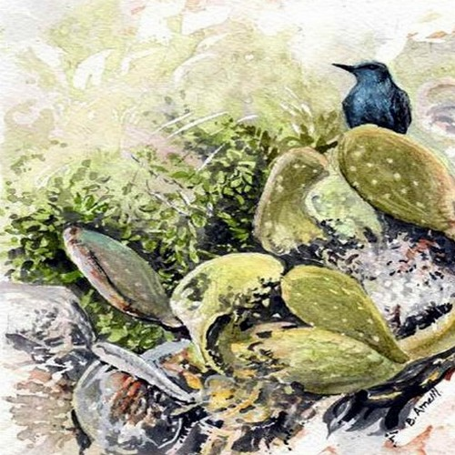 Spring Watch inspired wildlife art book launched today