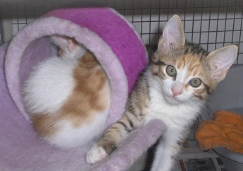 The Gozo SPCA's latest arrival of kittens awaiting homes