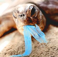 Nature Trust (Malta) appeals against the release of balloons