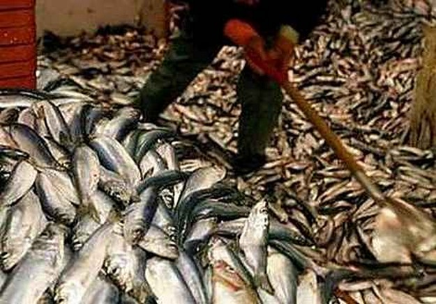2010 Aquaculture industry down €20.3 m a fall of 26%