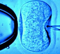New IVF treatment is slammed as discriminatory by AD