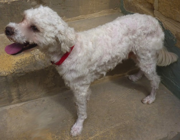 The Gozo SPCA would love LouLou to have a second chance