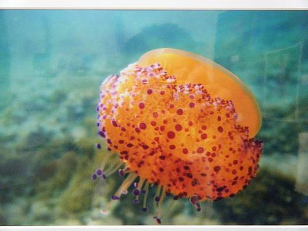 2011 Photographic Competition for the Marine Environment