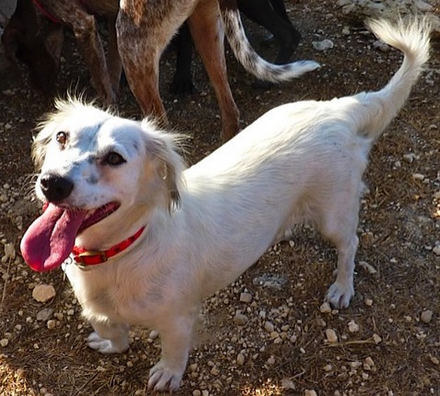 Bonnie is waiting for a new home at the Gozo SPCA Centre
