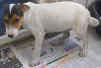 Elliot is at the Gozo SPCA Centre waiting for a loving home