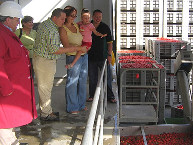Magro Brothers ready to start this year's tomato season