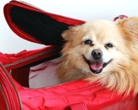 Air Malta to allow small pets in passenger cabin from 2012