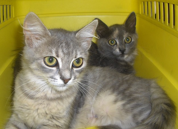 Rosie & Ruthie are at the Gozo SPCA ready for a new home