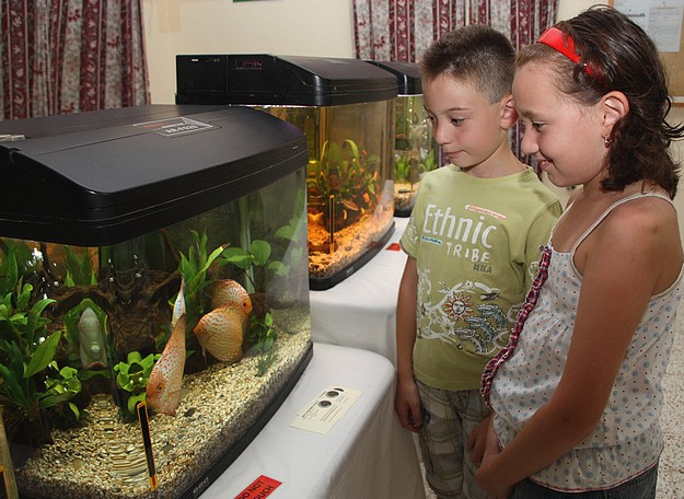 Twenty one aquariums displayed at Gozo's Annual Fish Show
