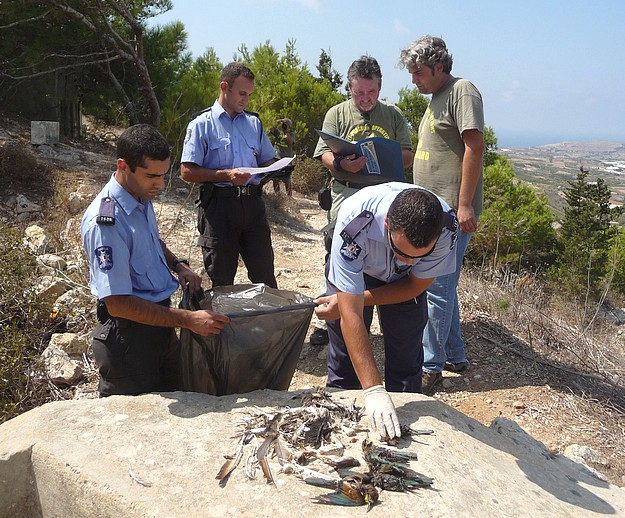 CABS discovers carcasses of protected migrant birds