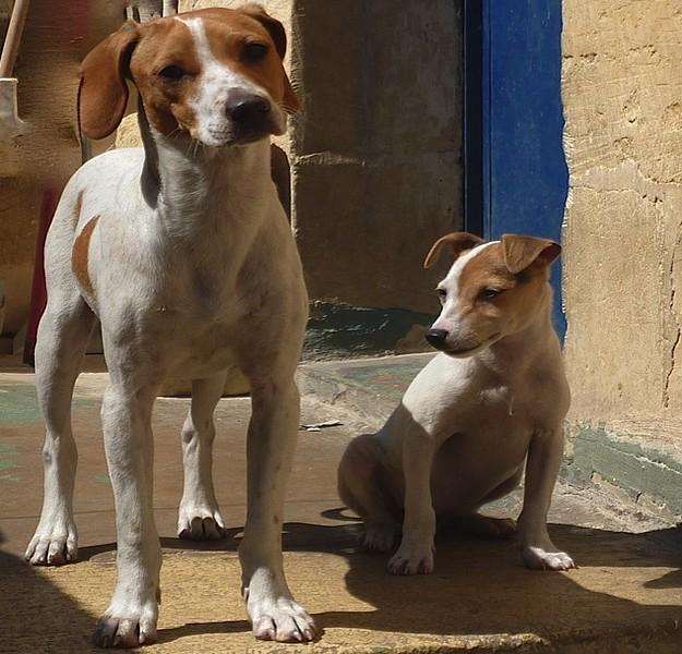 Midge & Elliott, waiting at the Gozo SPCA for new homes