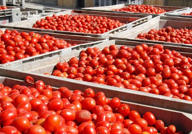 Tomato season comes to an end at Magro's Xewkija plant