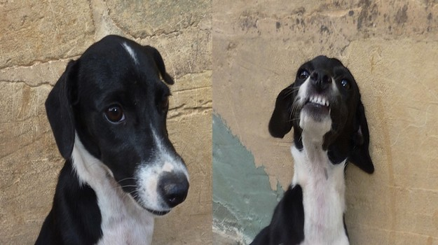 Smiley & Chuckles are waiting for homes at the Gozo SPCA