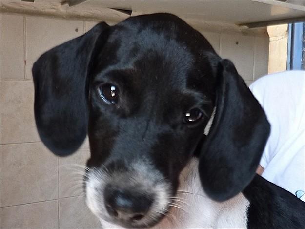 The Gozo SPCA celebrates World Animal Day this Tuesday