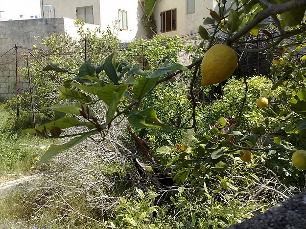 First Ghaxaq, now an old Balzan garden - Readers Letter
