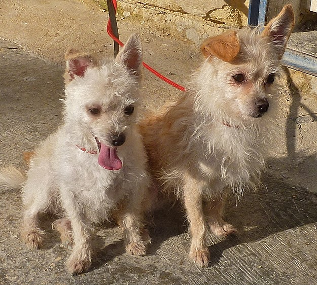 A Gozo SPCA makeover for two very friendly little dogs
