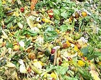 Urgent call for measures to halve food waste by 2025 in EU