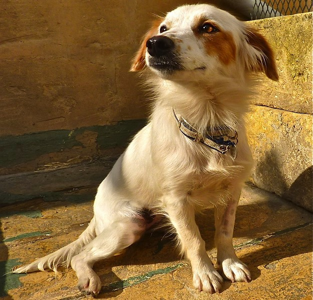 The Gozo SPCA hopes that Qala soon finds a loving home