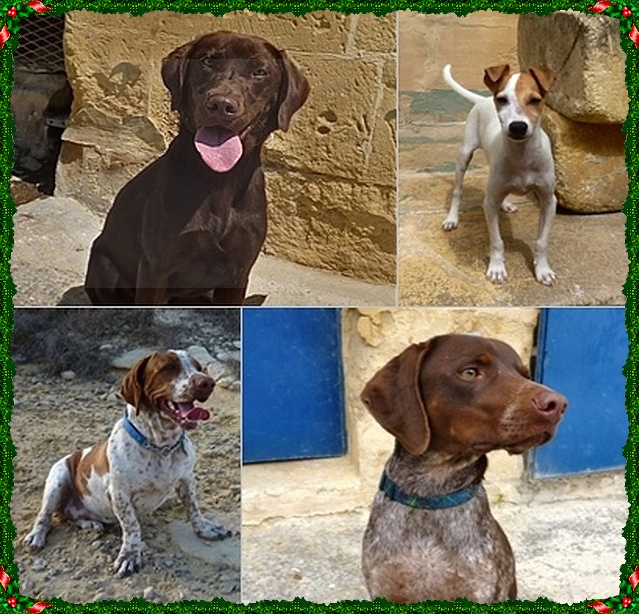 4 dogs who will be spending their Christmas at Gozo SPCA