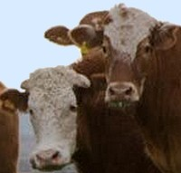 Proposed EU concession to end hormone beef trade war