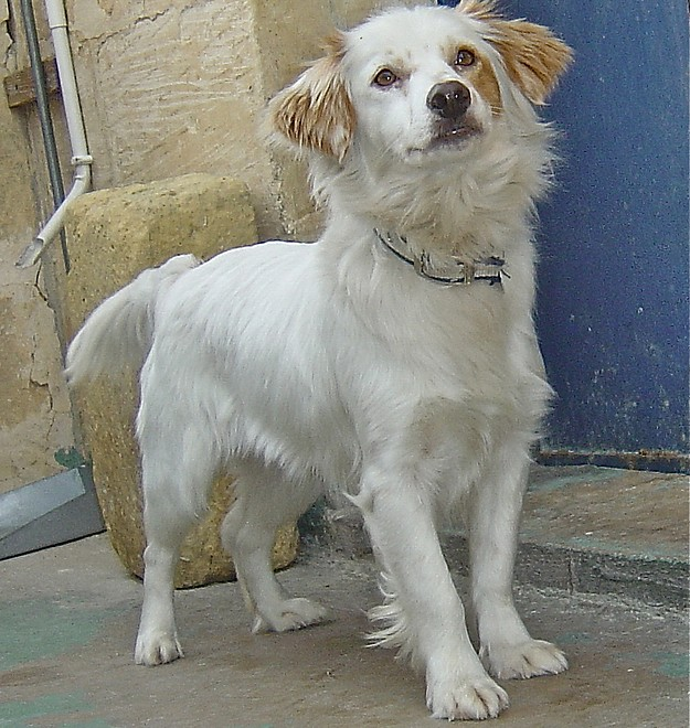 The Gozo SPCA hopes Kala will soon find a loving home