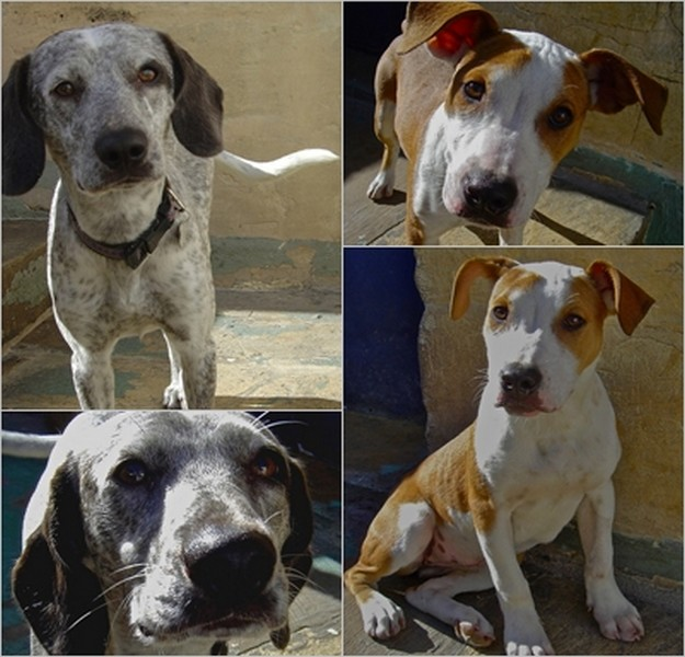 Pearl & Purdy are at the Gozo SPCA hoping for loving homes