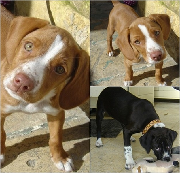 Sandy & Pandora, 2 lovely puppies needing 'forever' homes