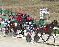 Gozo Horse Racing Association race meeting this Sunday
