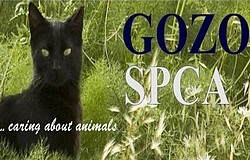 Donations of any unwanted items needed by the Gozo SPCA
