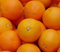 24 tonnes of oranges from Eygpt withheld due to pesticides