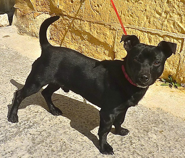 Blaze is a friendly & happy little dog waiting for a new home