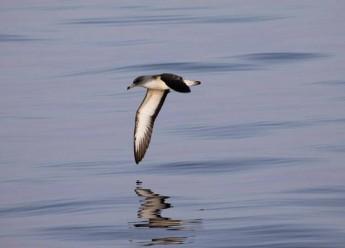 Global decline in seabird populations concerns scientists