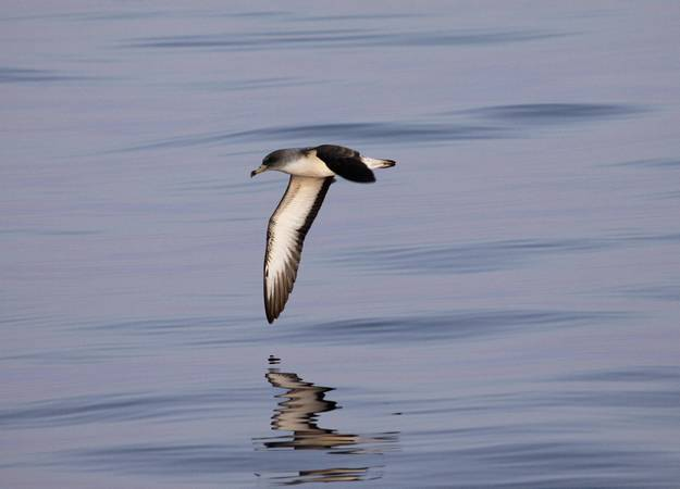 Global decline in seabird populations concerns scientists