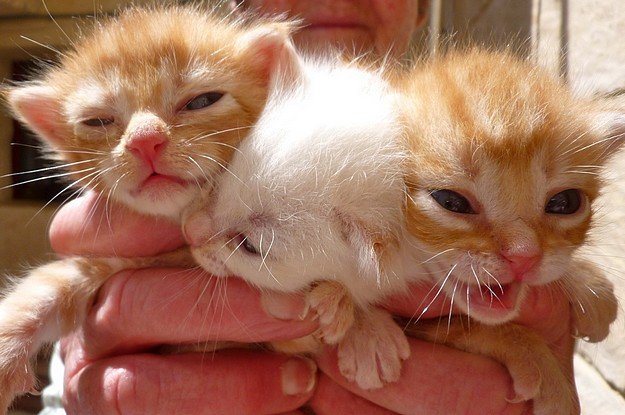 Gozo SPCA hope these 3 kittens will soon have loving homes