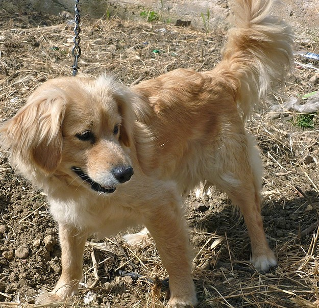 Gozo SPCA is in urgent need of a loving home for Diana