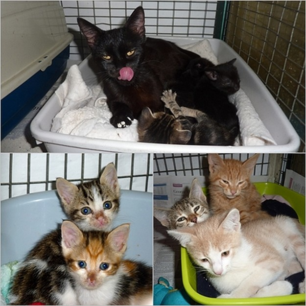 kittens and Mum waiting for loving homes at the Gozo SPCA