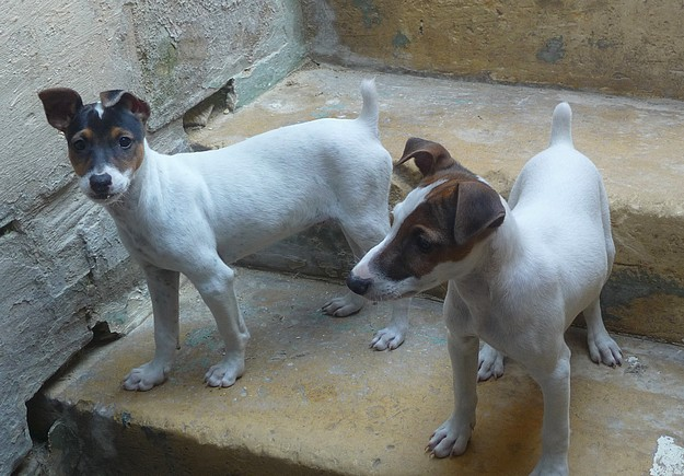Bailey &  Dougal are waiting for loving homes at Gozo SPCA