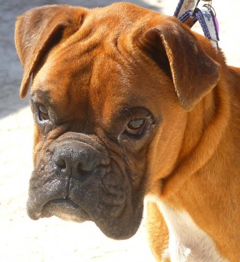 Gozo SPCA are looking for a loving forever home for Biff