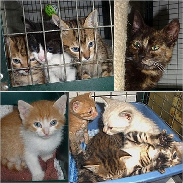 Gozo SPCA Centre needs urgent help with homes for kittens