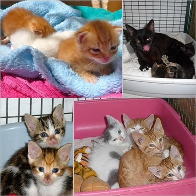 Gozo SPCA kittens all waiting for their own loving homes